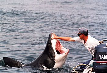 shark-in-south-africa